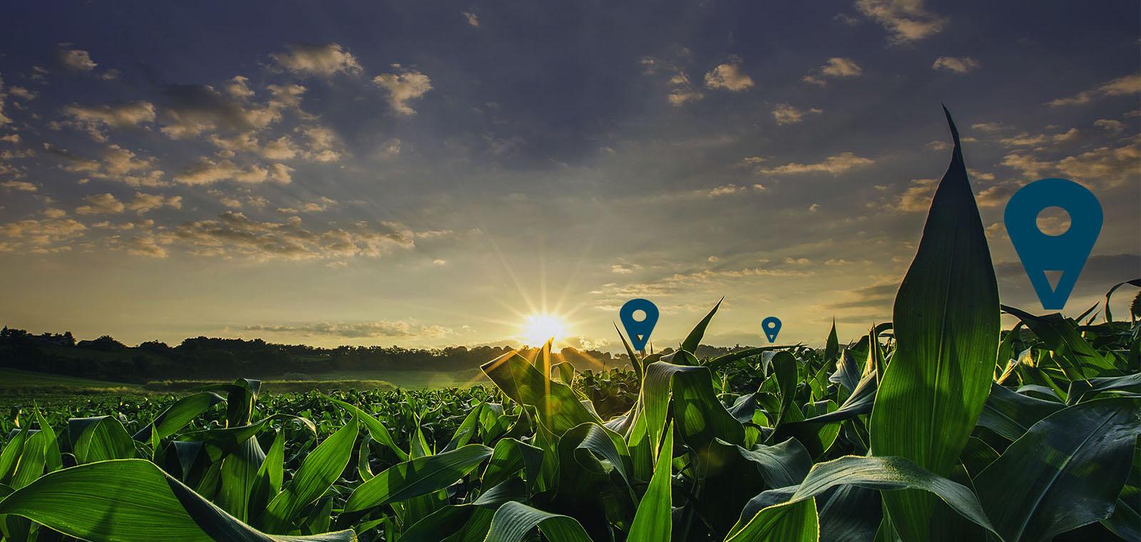SERVIZI TECNOLOGICI PER L' AGRICOLTURA